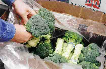 Mississauga, Ont.-based Chantler Packaging is the America's licensee for PEAKfresh film, which has the ability to absorb produce-degrading ethylene given off by certain fruits and vegetables. A large grocery chain is currently using the film in a trial to ship broccoli without ice.(PHOTO COURTESY OF CHANTLER PACKAGING)