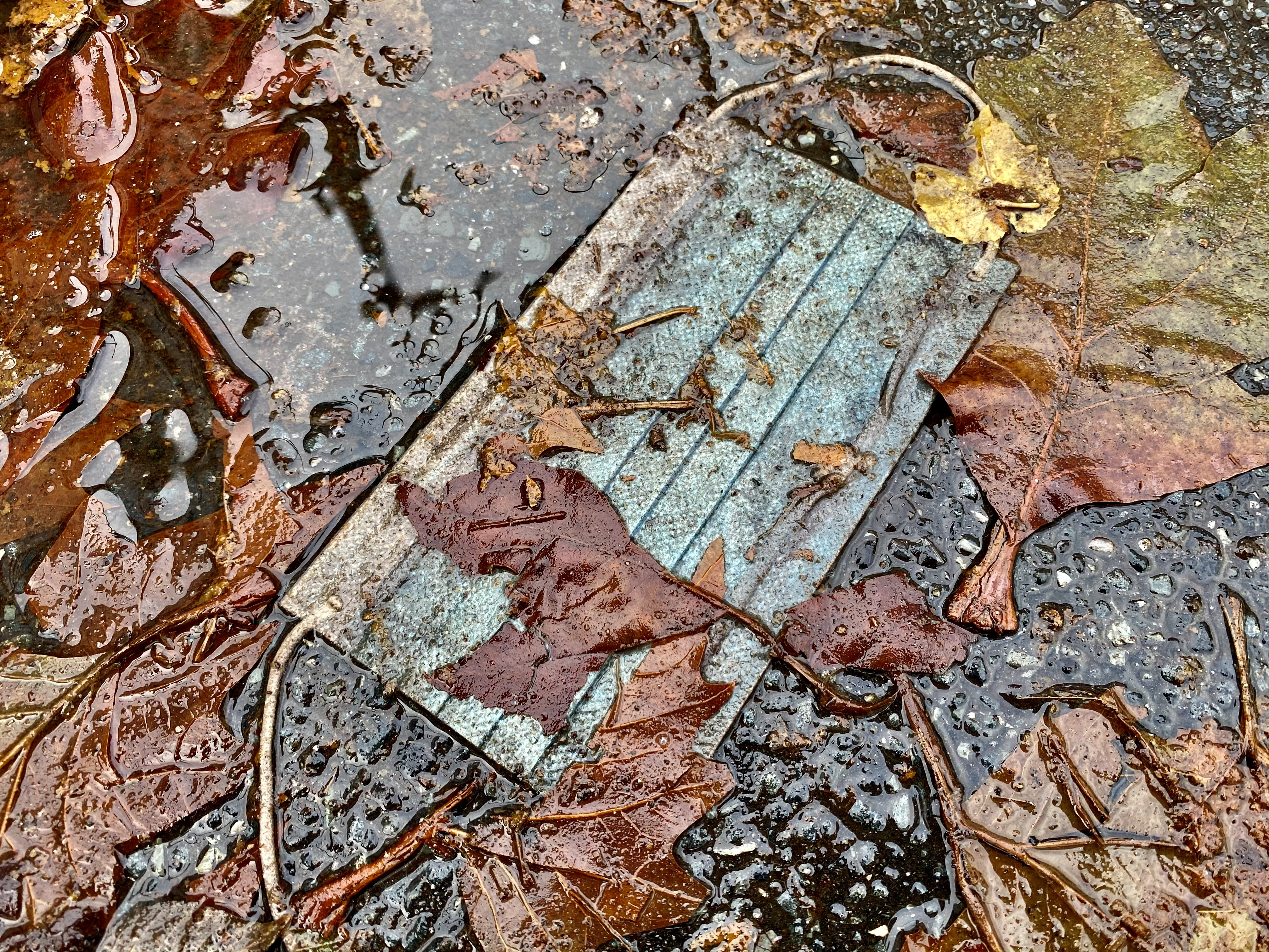 medical mask on the pavement with leaves
